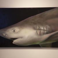 Marcel Walldorf_Der Weise Hai